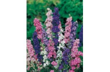 DELPHINIUM LARKSPUR GIANT IMPERIAL CROWN BLENDED MIX SEEDS - 100 SEEDS